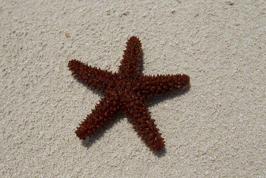 IFF Islands_Ragged Island Starfish_Image_Bahamas.com